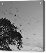Bird En Route Acrylic Print