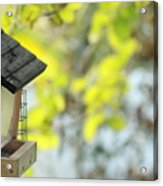 Bird Feeder Acrylic Print