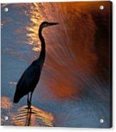 Bird Fishing At Sundown Acrylic Print