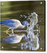 Bird Fishing In Lake Acrylic Print