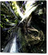 Bird Flight With Olive Branch Acrylic Print