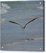 Bird Flying In The Surf 2 Acrylic Print