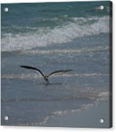 Bird Flying In The Surf Acrylic Print