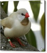 Bird Gazing Acrylic Print
