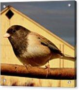 Bird House . 40d11078 Acrylic Print