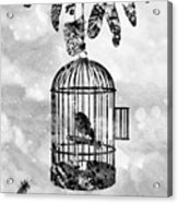 Bird In A Cage-black Acrylic Print