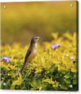Bird in a Garden Acrylic Print