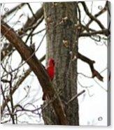 Bird In A Tree Acrylic Print