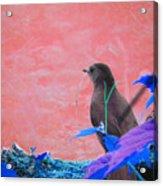 Bird In Abstract Acrylic Print