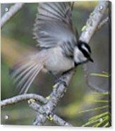 Bird In Action 2 Acrylic Print
