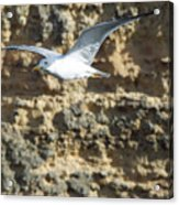 Bird In Flight Acrylic Print