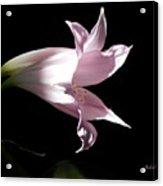 Lovely Lilies Bird In Flight Acrylic Print