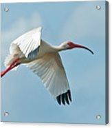 Bird In Flight Acrylic Print