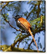 Bird In High Ground Acrylic Print