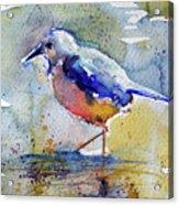 Bird In Lake Acrylic Print
