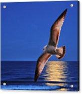 Bird In Moonlight Acrylic Print