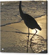 Bird In Paradise Acrylic Print