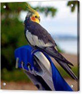 Bird In Paradise Acrylic Print