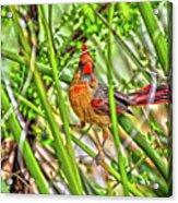 Bird In The Brush H D R Acrylic Print