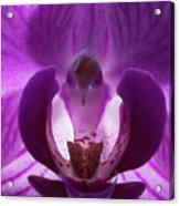 Bird In The Orchid Acrylic Print