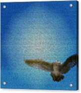 Bird In The Sky Acrylic Print
