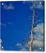 Bird In Tree Acrylic Print