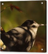Bird In Tree With Young Leaf Acrylic Print