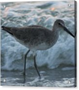 Bird In Waves Acrylic Print