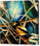Bird In Winter Acrylic Print