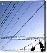 Bird Invasion Acrylic Print