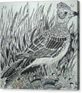 Skyirk Bird Acrylic Print