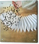 Bird Migration 2 Acrylic Print