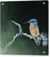Bird N.10 Acrylic Print