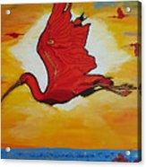 Bird Of Beauty, Loves Light In Flight Acrylic Print
