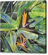 Bird Of Paradise 2 Acrylic Print