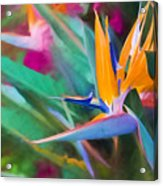 Bird Of Paradise  Acrylic Print