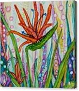 Bird Of Paradise In An Imaginary Garden Acrylic Print