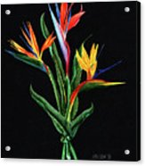 Bird Of Paradise In Black Acrylic Print