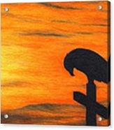 Bird Of Pray Acrylic Print