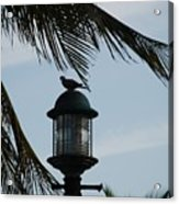 Bird On A Light Acrylic Print