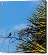 Bird On A Palm Branch Acrylic Print
