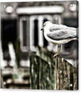 Bird On A Pole Acrylic Print