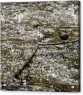 Bird On A River Acrylic Print