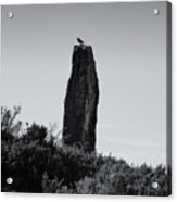 Bird On A Standing Stone Acrylic Print