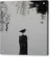 Bird On A Stump Acrylic Print