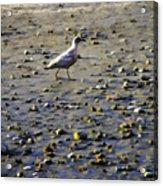 Bird On Beach Acrylic Print