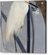 Bird On Boat Acrylic Print