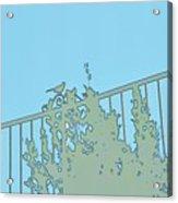 Bird On Fence Aqua II Acrylic Print