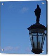 Bird On Lamplight Acrylic Print