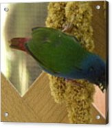 Bird On Lattice Acrylic Print
